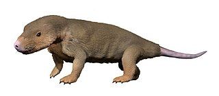 <i>Abdalodon</i> genus of therapsids