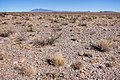 About two miles northwest of Cuchillo - Flickr - aspidoscelis.jpg
