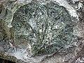 Actinolite xenolith in sandorite lamprophyre (Sandor Dike, Neoarchean, 2.703 Ga; Route 17 roadcut northeast of Wasp Lake & north of Wawa, Ontario, Canada) 3 (48342621891).jpg