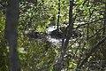 Agua y piedra - panoramio.jpg