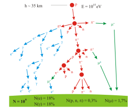 A branching tree representing the particle production