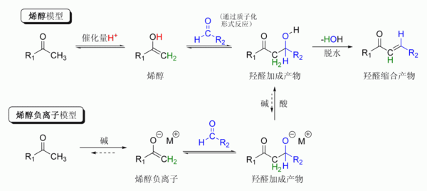 The Aldol reaction
