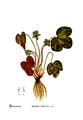 American Medicinal Plants-1-0025-2.png