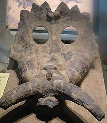 Anchiceratops Field Museum.jpg