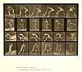 Animal locomotion. Plate 520 (Boston Public Library).jpg