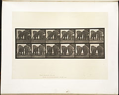Animal locomotion. Plate 734 (Boston Public Library).jpg