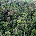 Anjozorobe Forest - panoramio.jpg