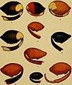 Annali del Museo civico di storia naturale Giacomo Doria (1915) (18384961786).jpg