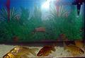 Aquarium fish11.JPG