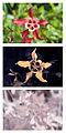 Aquilegia caerulea 'Crimson Star' Spectral comparison Vis UV IR.jpg
