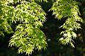 Arashiyama (8740640475).jpg