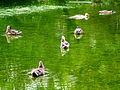 Arboretum - 'Land unter' nach Gewittersturm 2012-07-03 17-47-46 (P7000).JPG