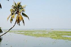 Arching palm tree.JPG