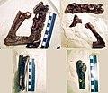 Aristosuchus parts.jpg