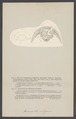 Armadillo vulgaris - - Print - Iconographia Zoologica - Special Collections University of Amsterdam - UBAINV0274 006 03 0041.tif