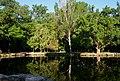 Askania-Nova Arboretum 02 (YDS 1919).jpg