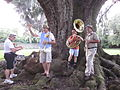 Audubon Wedding Tree Musicians.JPG