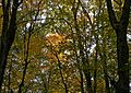 Automne-Parc-national-St-Bruno.jpg