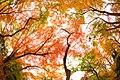 Autumn Color (185098097).jpeg