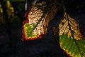 Autumn in iran پاییز در ایران- استان قم 04.jpg