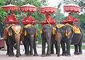 Ayutthaya elephants.JPG