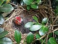 Baby Birds Are Doing Well (3637597802).jpg