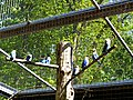 Bad Sassendorf – Kurpark - Vogelvoliere - panoramio.jpg