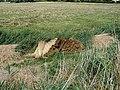 Bales of Norfolk Reed - geograph.org.uk - 223680.jpg