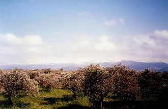 Batroumine - Image: Batroumine Olive Forests