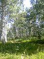 Baymaksky District, Republic of Bashkortostan, Russia - panoramio (6).jpg