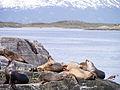 Beagle Canal, Argentinien (10614186255).jpg