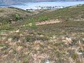 Below Ullapool Hill - geograph.org.uk - 821744.jpg