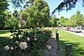 Benalla Rose Garden 003.JPG