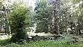 Berezhany Arboretum Park in Rai (4).jpg