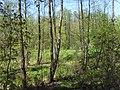 Bezhitskiy rayon, Bryansk, Bryanskaya oblast', Russia - panoramio (153).jpg