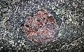 Big garnet amphibolite (Precambrian; Warrensburg, Adirondack Mountains, New York State, USA) 35.jpg