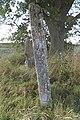 Bildsten Bro Eriks 1 (Suderbys 1) - KMB - 16000300015458.jpg