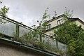 Birch in eaves v2.jpg
