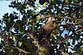 Bird 20.jpg