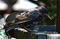 Birds..Birds..Birds.. (5931109860).jpg