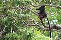 Black Monkey.jpg