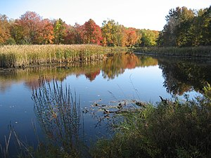 Photograph of a pond with still water; across the pond are aquatic plants and trees with autumn colors.