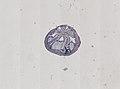 Blatta orientalis (YPM IZ 098929).jpeg