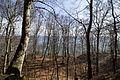 Blick durch Bäume am Gakower Hochufer (Sassnitz, Rügen).jpg