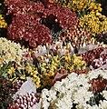 Bloemen, Bestanddeelnr 254-7541.jpg