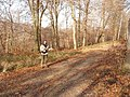Bloom Wood, Little Marlow - geograph.org.uk - 117560.jpg