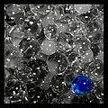 Blue pearl - Flickr - Stiller Beobachter.jpg