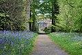 Bluebells at Rufford Old Hall (NT) (7203136358).jpg