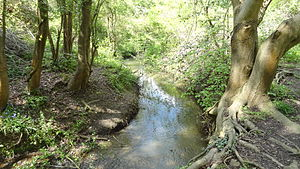Bonesgate Stream - Bonesgate Stream in Castle Hill