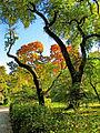Botanička bašta Jevremovac, Beograd - jesenje boje, svetlost i senke 05.jpg